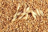 Conduct the purchase of barley at high prices
