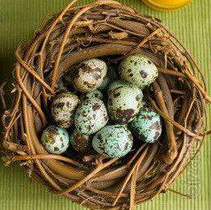 I sell eggs of female quails