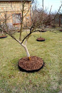обработка сада, деревье, формировка растений