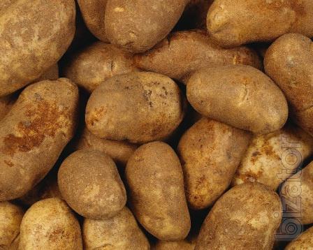 Продаем картофель сортов «Бриз», «Журавинка», «Скарб» выращенный в Беларуси
