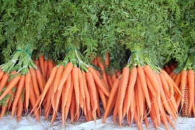 Продаем морковь сортов Шантане, Каротель, Фэнси выращенную в Беларуси