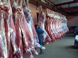Beef sides wholesale with slaughterhouse