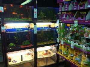 For sale business for sale - pet shop