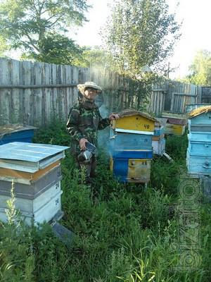 Ready-to-business (bees), quick return