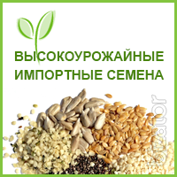 Corn seeds GALAXY - 216 FAO 250 Canadian transgenic hybrid.