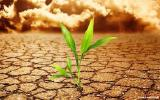 Продам регуляторы роста растений