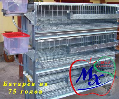 Cages for quail