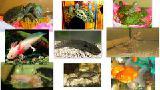 Разнообразные аквариумные животные! Доставка по Киеву!