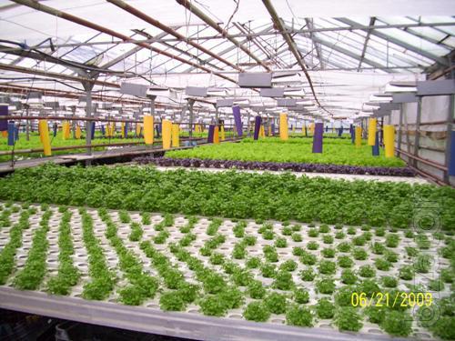 Sold salad line