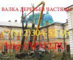 валка, спилка, снос, удаление  деревьев в СПб и ЛО