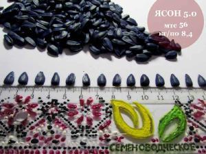 Семена подсолнечника Ясон. от производителя