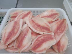 Frozen tilapia fillet at low price