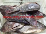 Frozen tilapia GS good quality good price