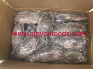 Frozen tilapia whole round at very low price