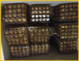 Перепелиные яйца - перепелов, домашние.