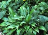 Цветы, декоративные растения и кустарники на сезон ВЕСНА-ОСЕНЬ 2013-2014 - Декор