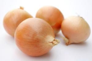 Продаем овощи и фрукты выращенные в Беларуси - Лук сорта «Нерато»