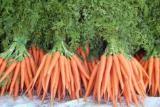 Продаем овощи и фрукты выращенные в Беларуси - Морковь сортов «Шантане», «Кароте