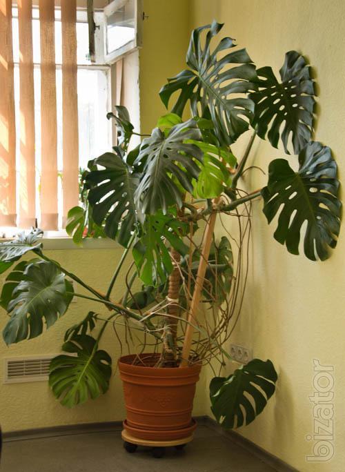Передвижная подставка под вазоны с растениями и цветами - Подставка под цветы